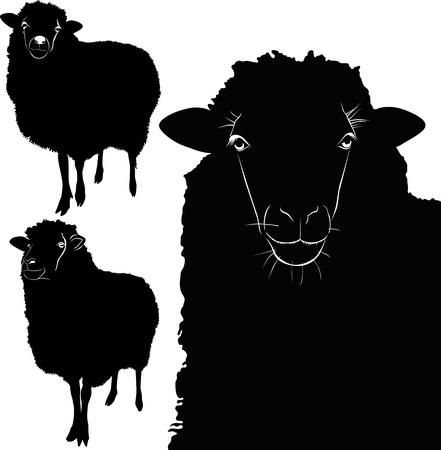 mouton noir: vecteur d'agneau de moutons animal isol� sur fond blanc