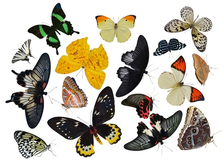 insect collection of butterflies isolated on white background Stock Photo - 20245080