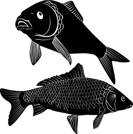 carp fishing: carpa pesce isolato su uno sfondo bianco