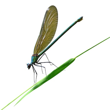 resplendence: dragonfly sits on a blade of grass