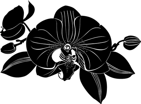 Orchids flowers it is isolated Vector