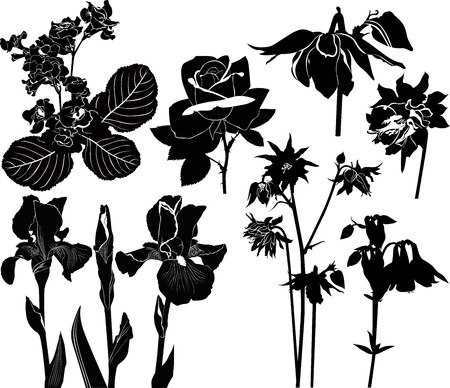 collection of irises flowers roses orchids columbine Vector
