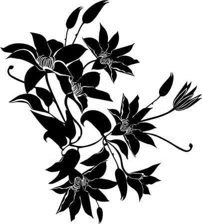 flori culture: clematis flowers vector isolated Illustration