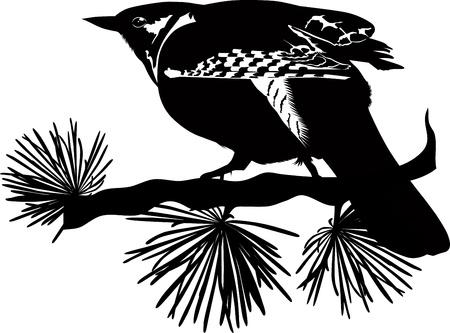 cuckoo bird sits on a tree branch Stock Vector - 20660230