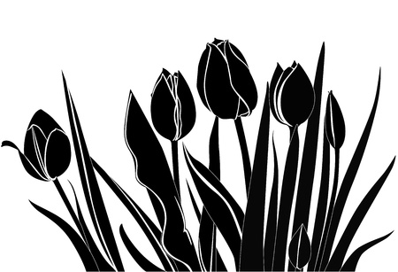 tulips flowers it is isolated Stock Vector - 20669102