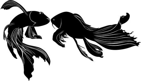 peces de acuario: carpa goldfish aislado en fondo blanco