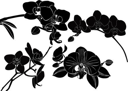 orchidee bloemen verzamelen geïsoleerd op een witte achtergrond Stock Illustratie