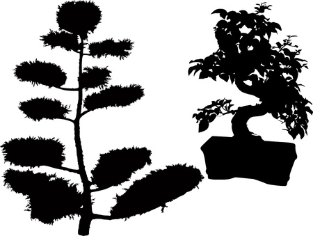 rubber plant bonsai trees and conifers Vector