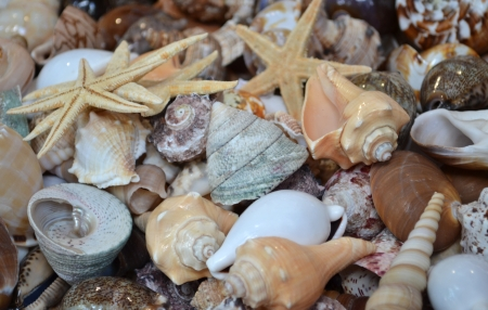 background sea shells star photo