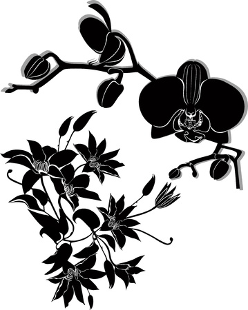 orchid flowers vector clematis isolated Vector