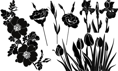 flowers tulips irises roses Vector
