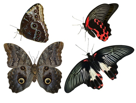 collection of tropical butterflies photo