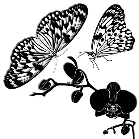 tropical butterflies and orchids isolated on white background Vector