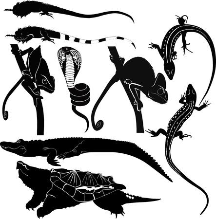 amphibians crocodile chameleon iguana lizard turtle cobra Stock Vector - 21987318