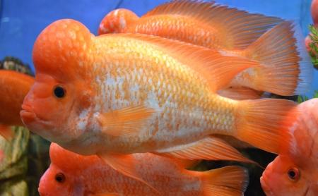 marine aquarium fish Stock Photo - 22013051
