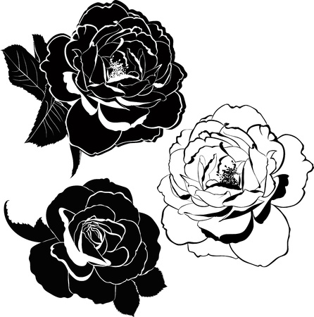flower tattoo:  rose flowers isolated on white background