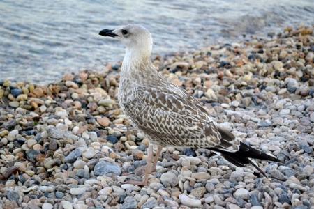 albatross: seagull on the beach