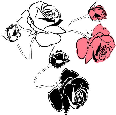 rose tattoo:  rose flowers isolated on white background