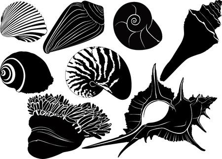 Nautilus seashells  anemones isolated on white background