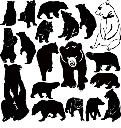 collection of animal bears Vector