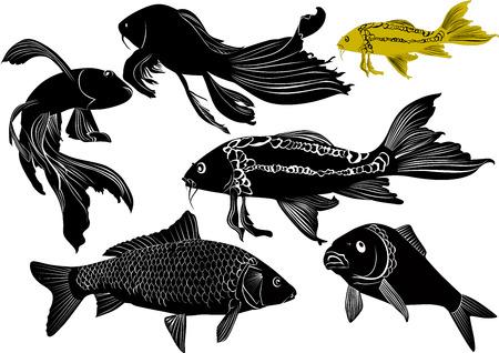 fish animal: goldfish carp