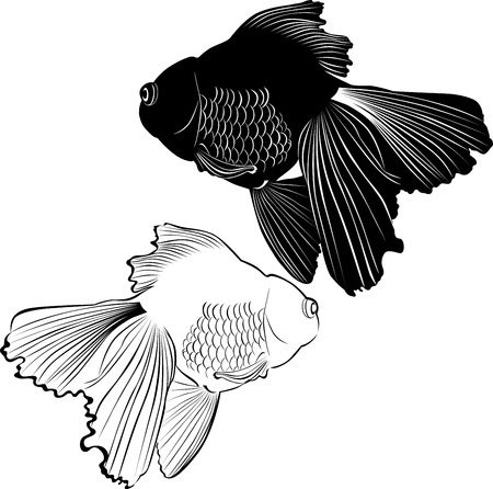 pez carpa: carpa goldfish