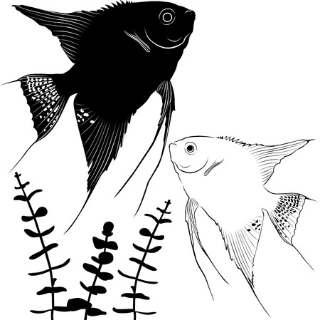 Angelfish silhouette ichthyology illustration Vector