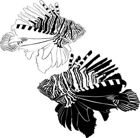 dragon fish: marine aquarium fish Zebra Lionfish samara