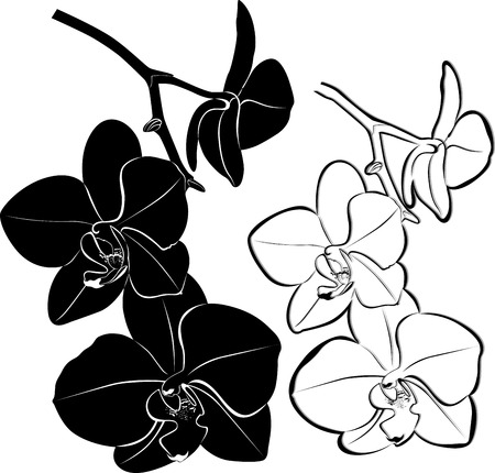 Orchids flowers isolated Vector