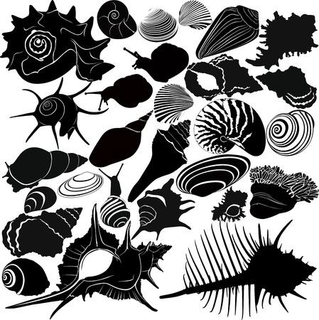 conchas: concha de un caracol