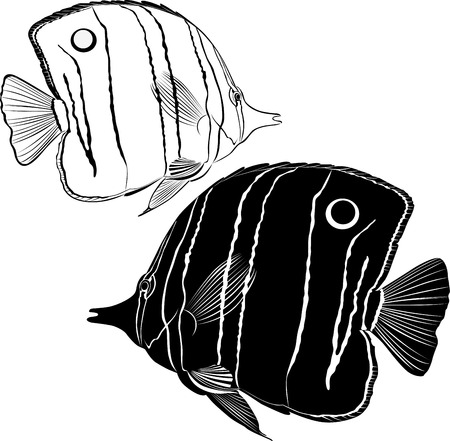 sea butterfly fish Vector