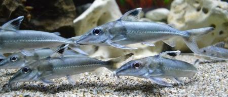 aquarium fish Stock Photo - 24163073