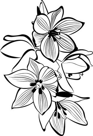 branch to grow up: orchids