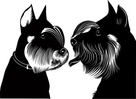canines:    miniature schnauzer dog