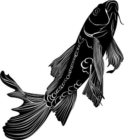 carp: carp Illustration