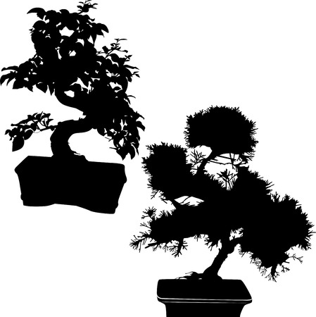 spruce and ficus bonsai isolated Vector
