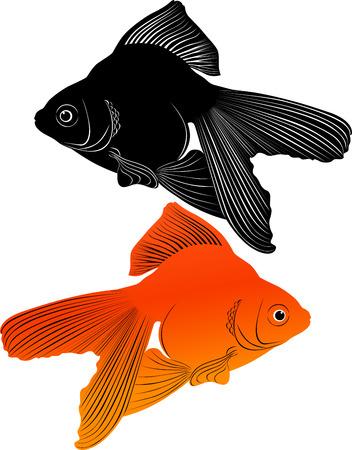 koi fish art: goldfish Illustration