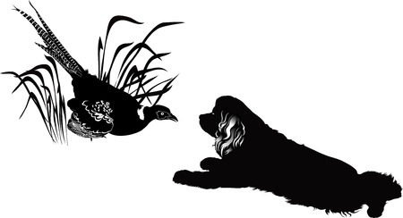 bird pheasant and the American Cocker Spaniel Illustration