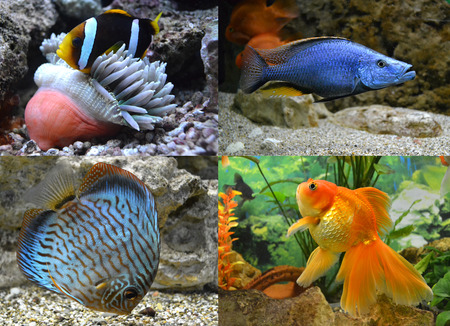 marine aquarium fish photo