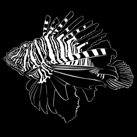dendrochirus zebra: Zebra Lionfish