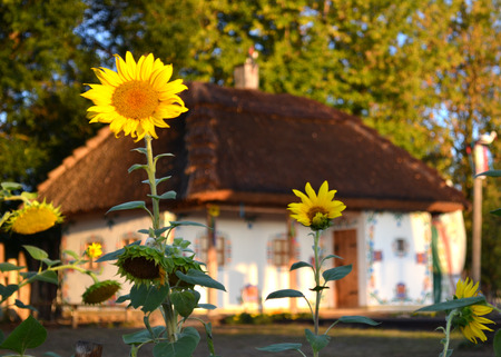 house in the Ukrainian style with sunflowers Stock Photo