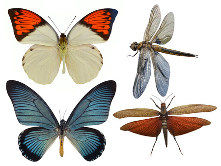 butterfly, dragonfly, grasshopper and dragonfly photo