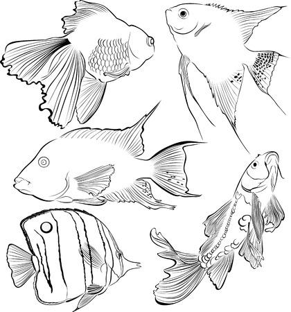 common carp: collection of aquarium fish Illustration