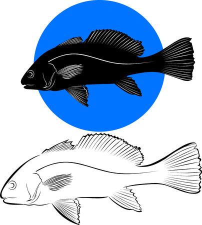 sockeye: salmon