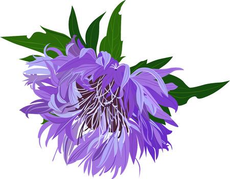 distel: Mariendistel Distel Blumen Illustration