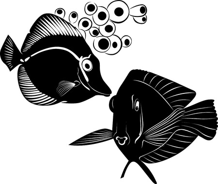 chelmon: sea butterfly fish