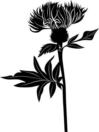 Milk thistle thistle flowers Vector