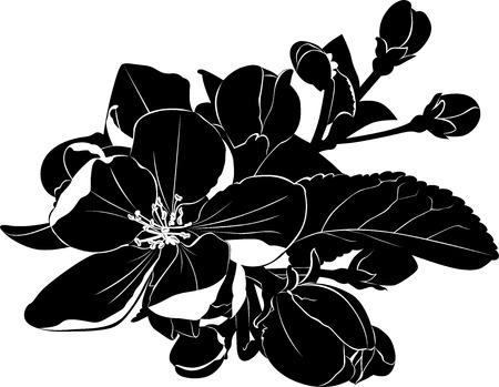 flor de durazno: floreciente rama de un �rbol de manzana