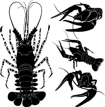 Lobster Crawfish Vector