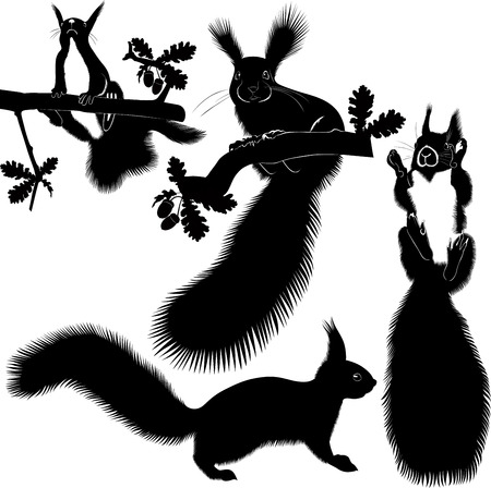 animal squirrel tree Christmas tree Vector